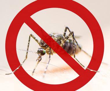 Le gouvernement a engagé plus de 100 millions de francs pour son plan d'action depuis le début de l'épidémie de dengue.
