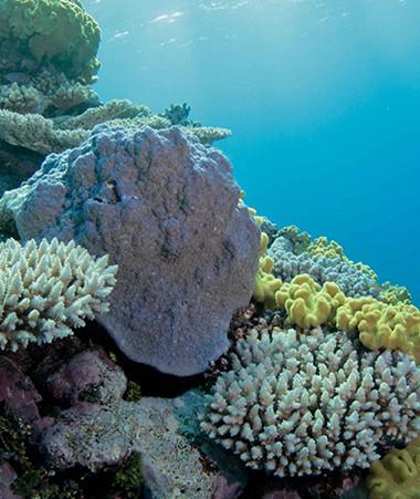 Le comité national de l'IFRECOR est réuni en Nouvelle-Calédonie du 18 au 22 septembre (crédit : Jean-Michel Boré/IRD).