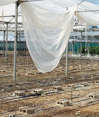 Le cyclone Cook n'a pas épargné les cultures agricoles, notamment celles sous serre.