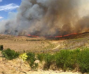 Les incendies qui ont ravagé la zone de Bangou-Koumédio ont duré près de trois semaines.
