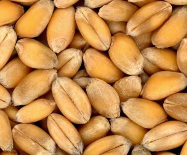 Le blé, le soja et le maïs génétiquement modifiés et destinés à l'alimentation animale sont désormais interdits.