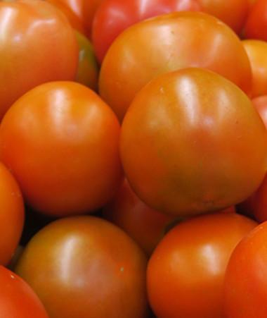 Le prix des tomates en magasin sera plafonné à 800 F/kg, 850 F pour la salade.