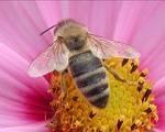 Enquête apicole