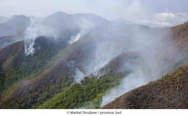 Déjà 4 000 hectares partis en fumée