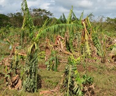 Le gouvernement a reconnu le 18 avril le caractère de calamité agricole aux dommages provoqués par le cyclone Cook.