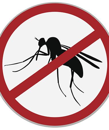 L'épidémie de dengue de type 2 a été déclarée le 21 décembre 2018.