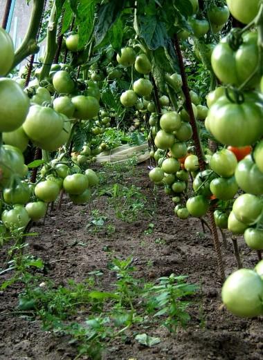 Vers la fin des produits chimiques dans nos jardins