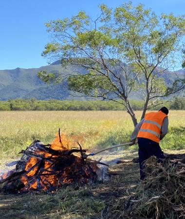 La lutte contre le scarabée rhinocéros s'est intensifiée dans la zone infestée qui va de La Tamoa à Tomo.