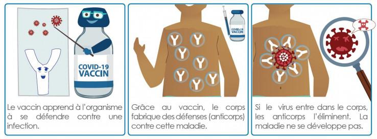 vaccin-fonctionnement.jpg