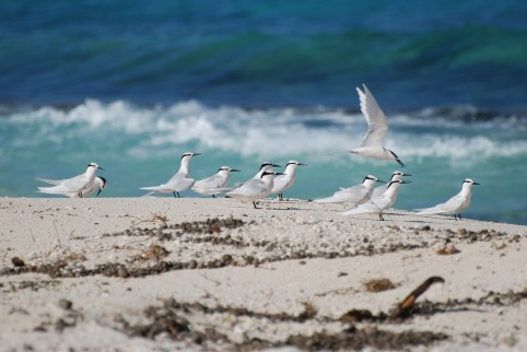 Ce classement permet notamment de protéger les habitats clés indispensables au cycle de vie des espèces.
