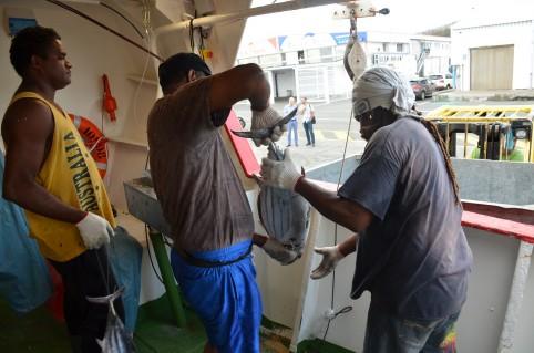 """Une """"bonne"""" pêche, c'est environ 50 prises par jour. Chaque campagne dure en moyenne une douzaine de jours et représente une dizaine de jours de pêche."""