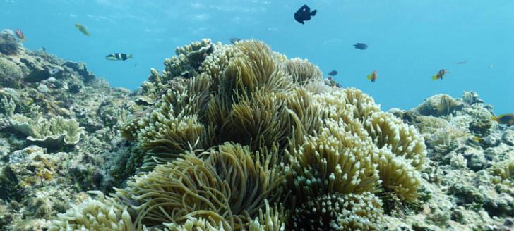 Le comité scientifique se penche aussi sur le suivi des récifs et des îles éloignées du Parc (© Nicolas Petit).