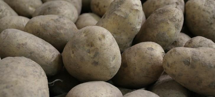 Le gouvernement a adopté un cadre réglementaire pour la lutte contre une bactérie qui affecte la productivité des plants de pommes de terre.