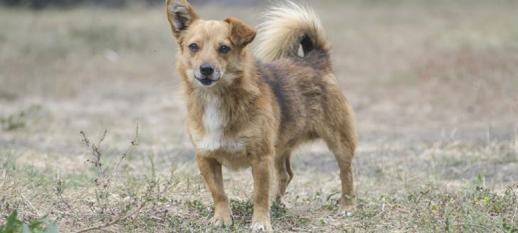 La stérilisation des chiens et des chats est le meilleur moyen de limiter leur divagation, la maltraitance, la misère animale et les abandons.