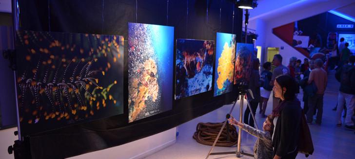 L'exposition « Immersion inédite au cœur des atolls d'Entrecasteaux », situés dans le Parc naturel de la mer de Corail, est visible toute la semaine au Rex.