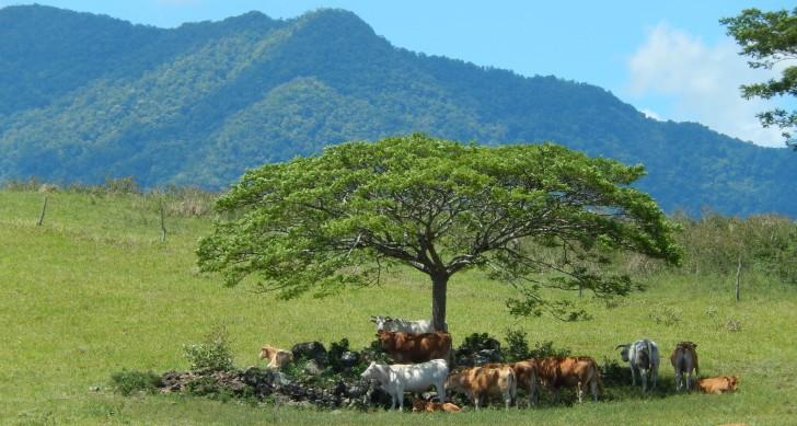 Des baux ruraux simplifiés