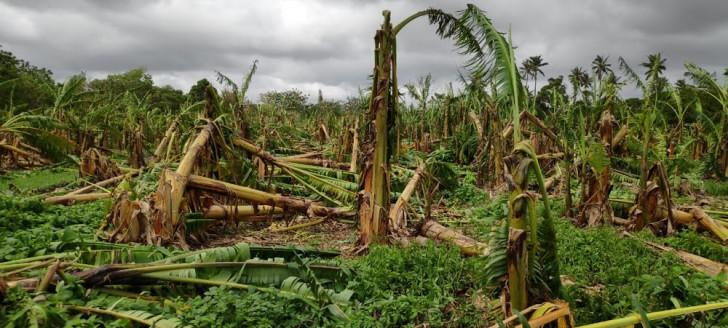 Pour venir en aide aux agriculteurs sinistrés par les deux derniers événements climatiques, le gouvernement a rapidement mis en œuvre un plan de soutien afin qu'ils puissent bénéficier des premières indemnisations.